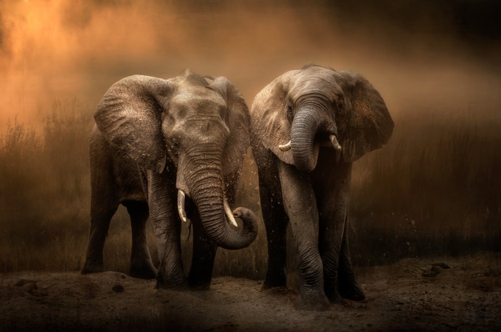 Elephants dust bath...