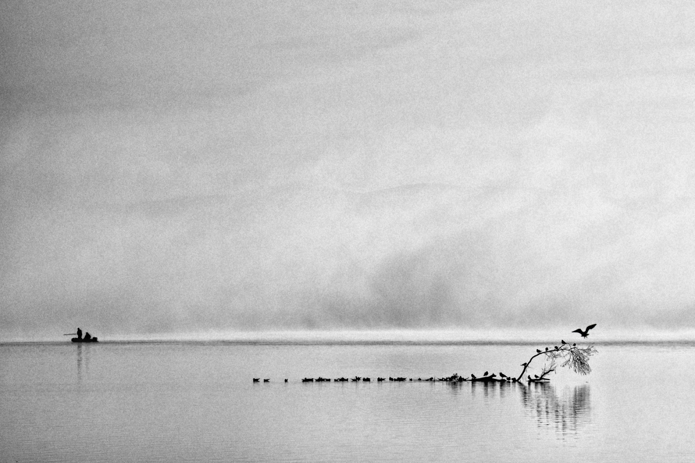 A piece of fine art art photography titled Morning Fishing With Birds by Juraj Cicatko - (ASON)