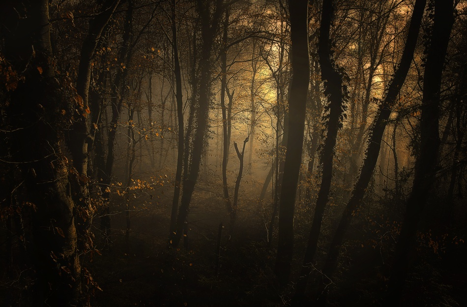 A piece of fine art art photography titled Late Afternoon by Norbert Maier