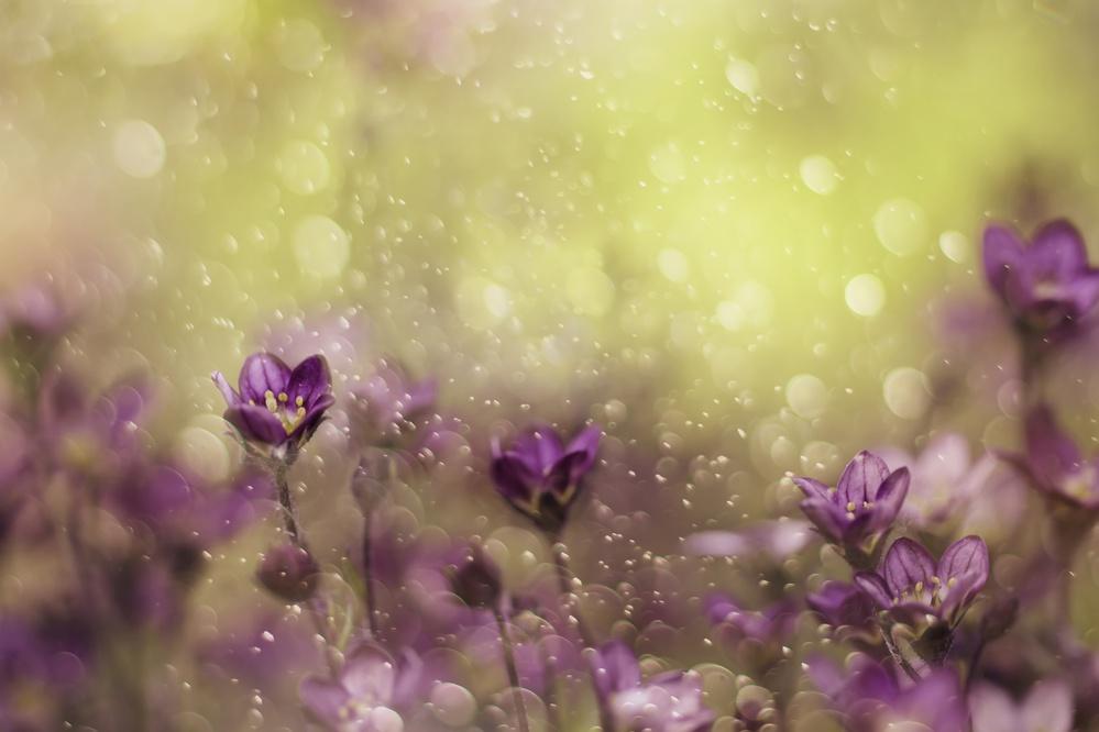 A piece of fine art art photography titled Purple Dream by Delphine Devos