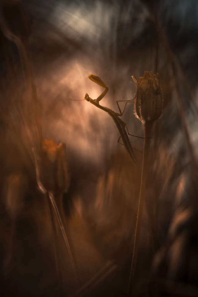 A piece of fine art art photography titled The Warrior's Code by Fabien BRAVIN