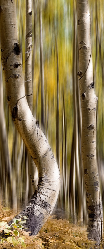 A piece of fine art art photography titled Stand UP! by Jerry Berry