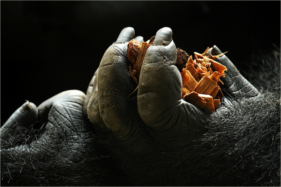 A piece of fine art art photography titled Small Hands by Ulrich Brodde