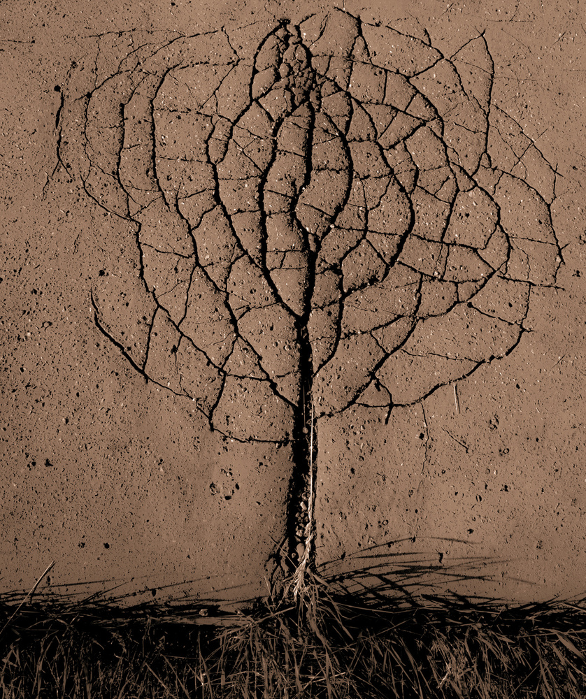A piece of fine art art photography titled Asphalt Tree by Rasto Gallo