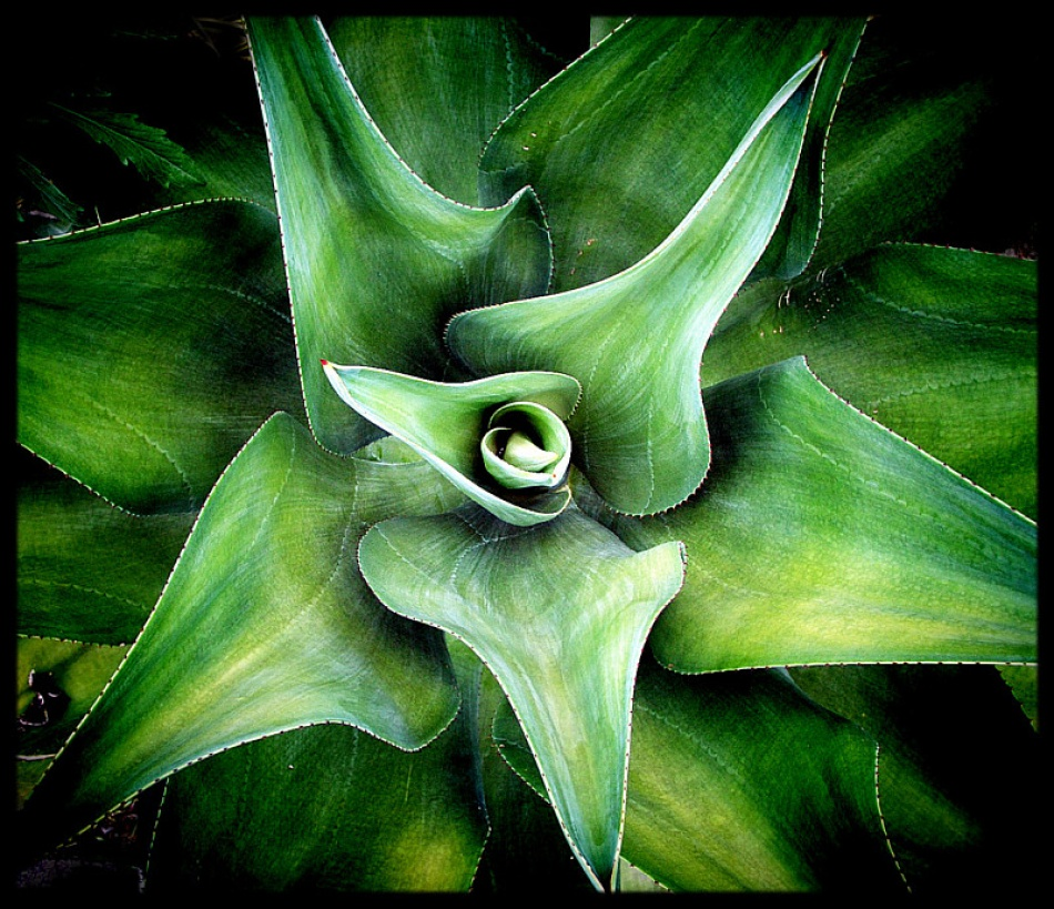 A piece of fine art art photography titled Rosette In Green by sawsengee