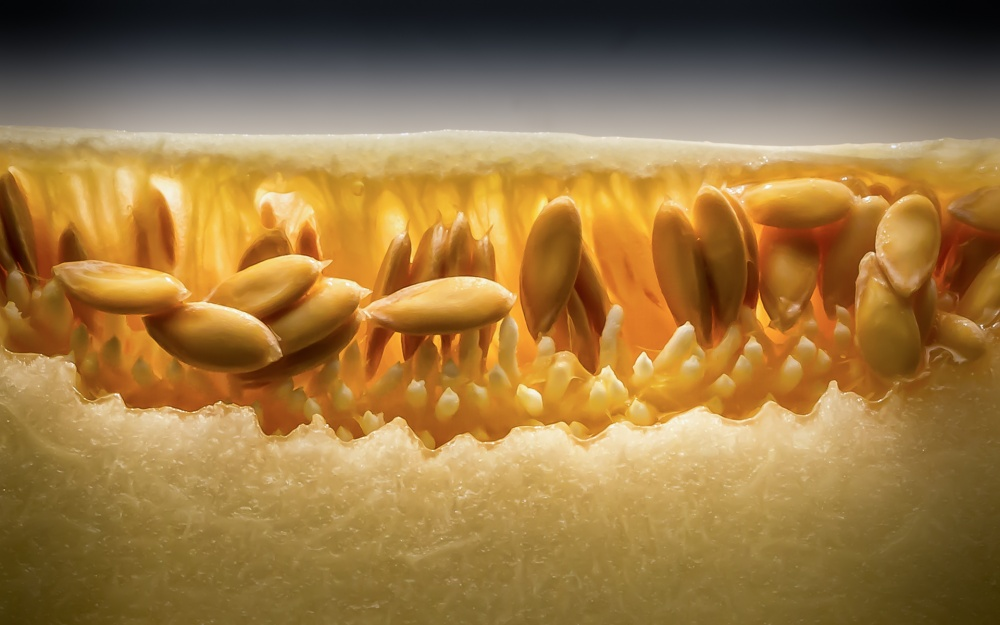 A piece of fine art art photography titled Melon by Frank Smout Images