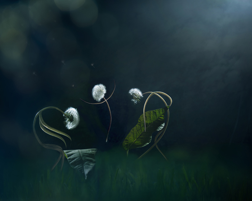 A piece of fine art art photography titled Moonlight Serenade by Tatiana Gorilovsky