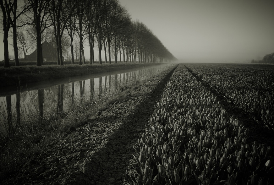 A piece of fine art art photography titled Untitled by Waldemar Wienchol