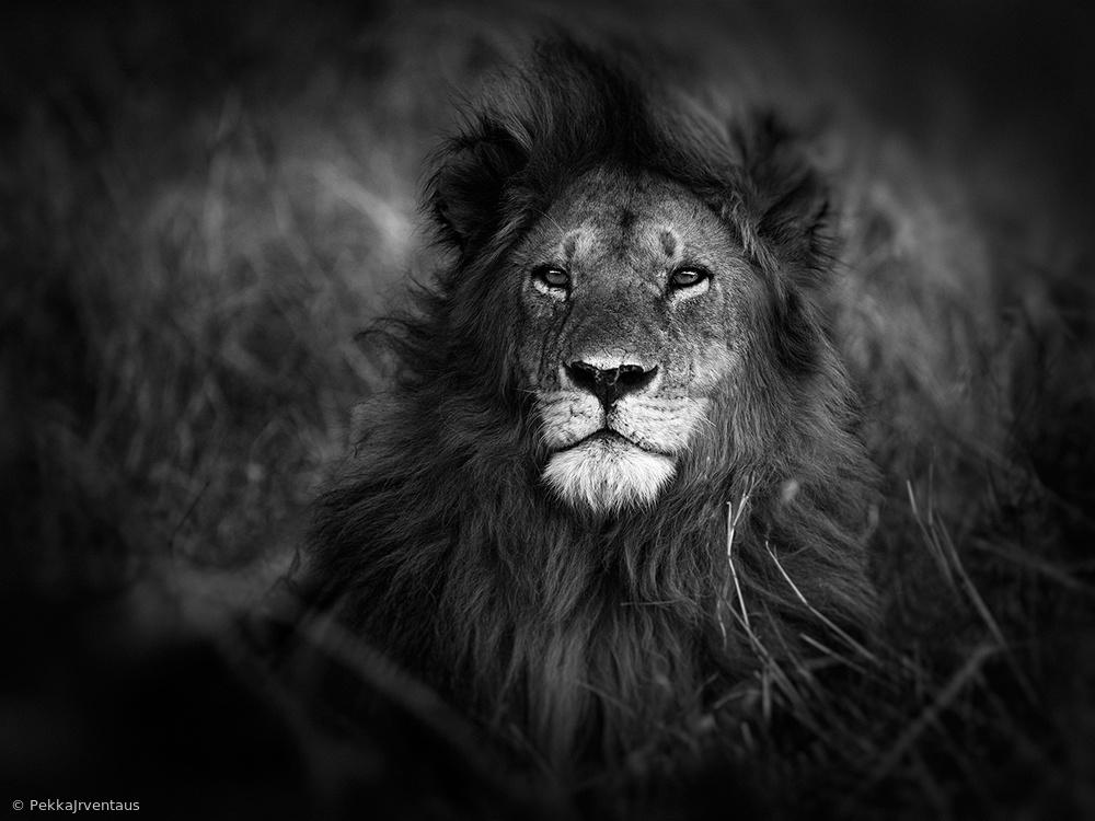 nomad male, masai mara kenya.