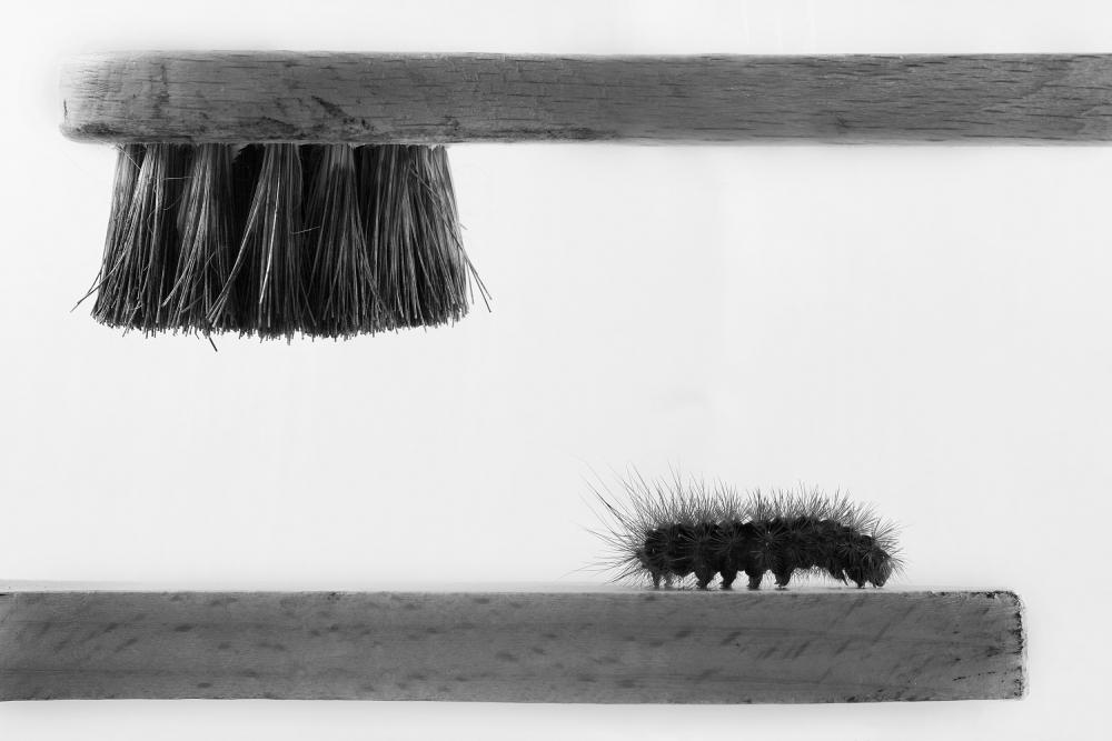 A piece of fine art art photography titled Dear Friend by Stefano Mallus