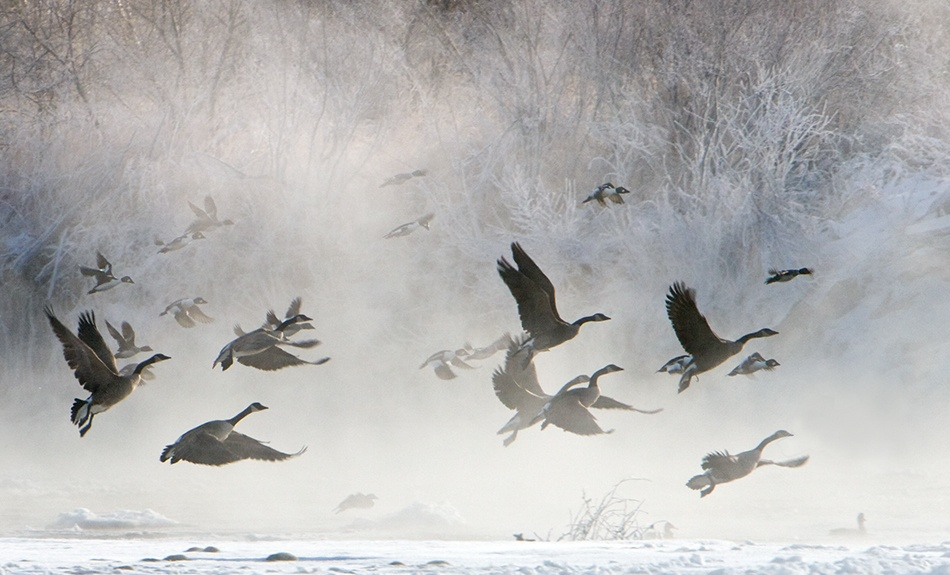 A piece of fine art art photography titled Cold Morning Flight by Doug Roane