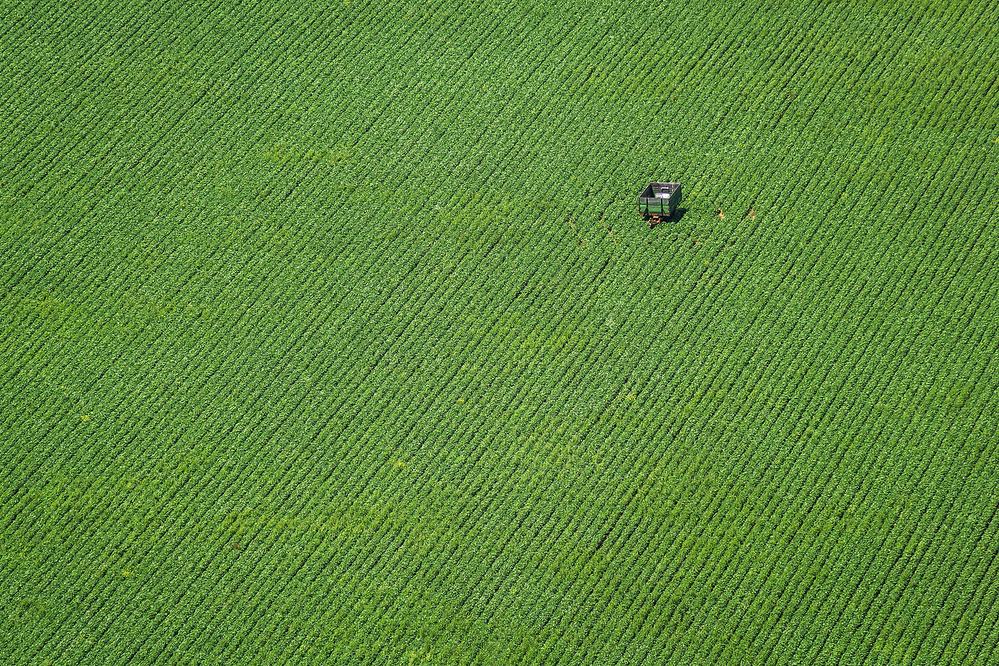 A piece of fine art art photography titled Corn Field by Hőbér Szabolcs