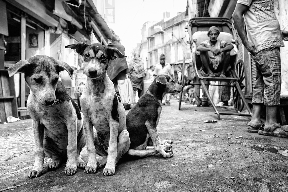 View this piece of fine art photography titled Kolkata by Giulio Sangiuliano