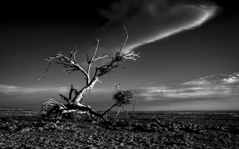 A piece of fine art art photography titled Salton Sea Sculpture by Rob Darby