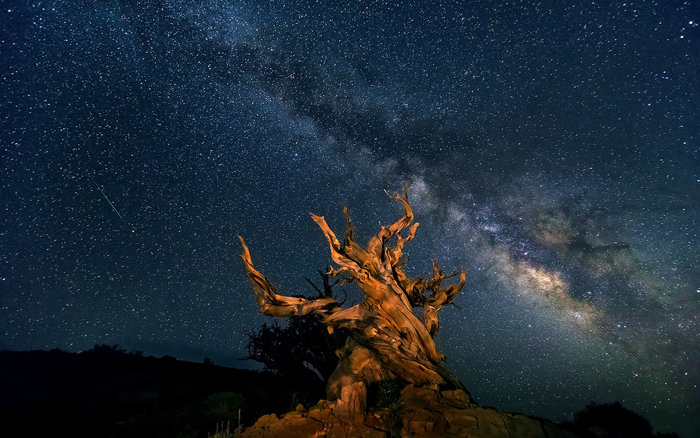 A piece of fine art art photography titled The Galaxy and Ancient Bristlecone Pine by Hua Zhu