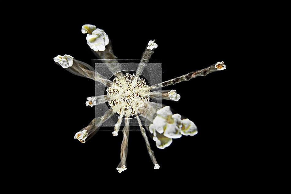 A piece of fine art art photography titled PopCornExplosion by Manuel Cafini