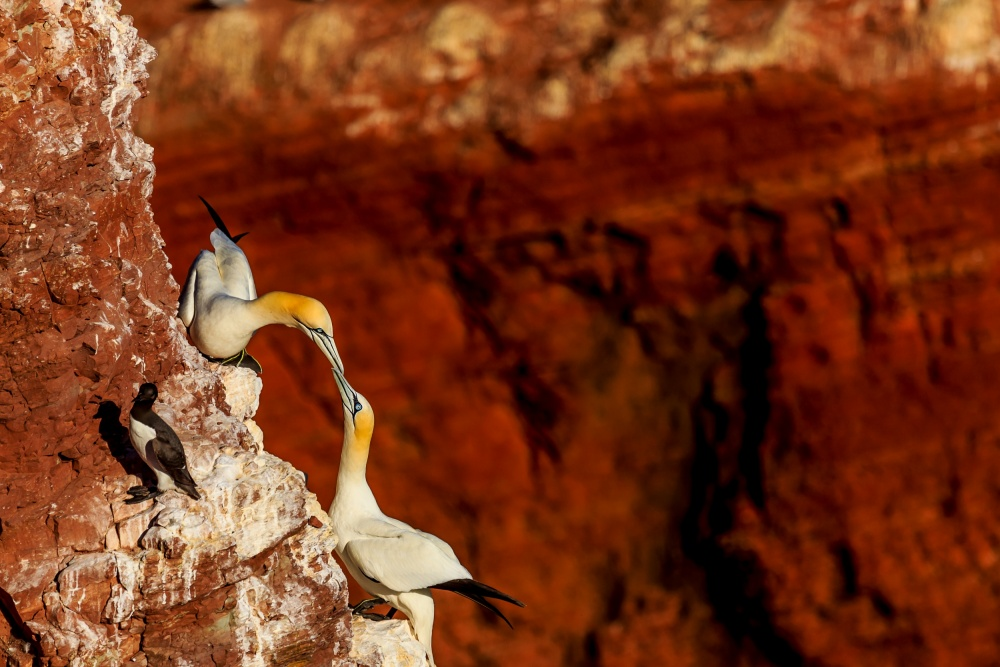 A piece of fine art art photography titled Precarious Meeting Point by Jaap Coorens