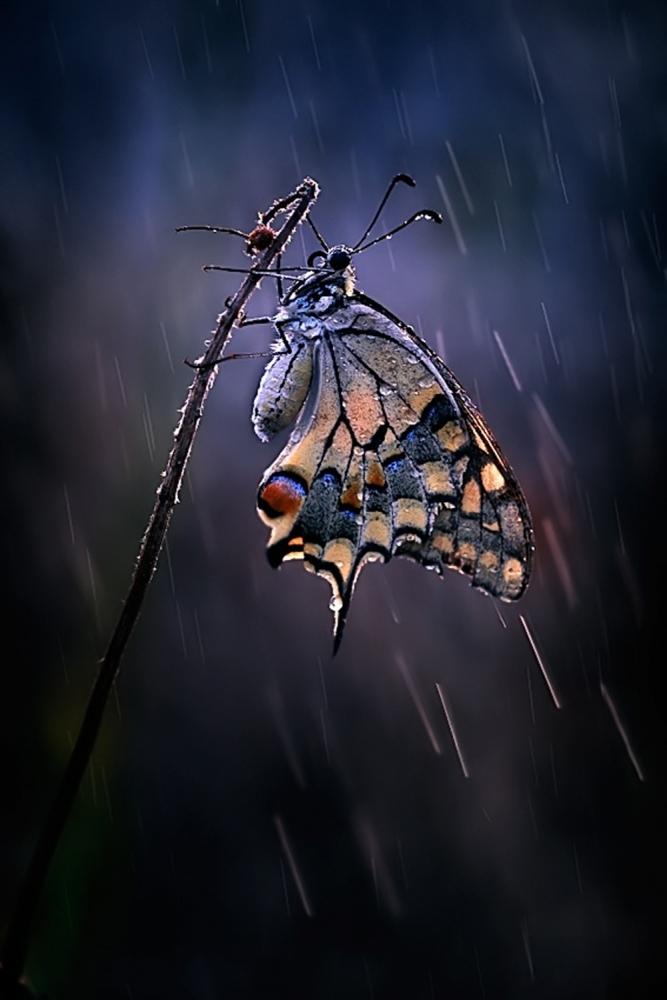 A piece of fine art art photography titled Under the Summer Rain by Antonio Grambone