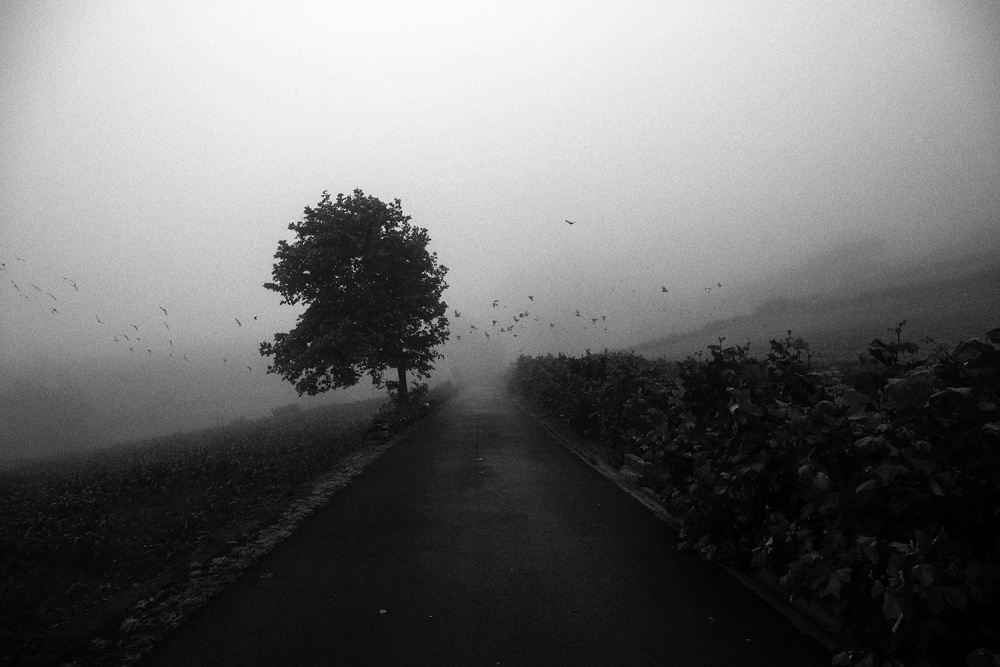 A piece of fine art art photography titled Road by Daniel Rodrigues