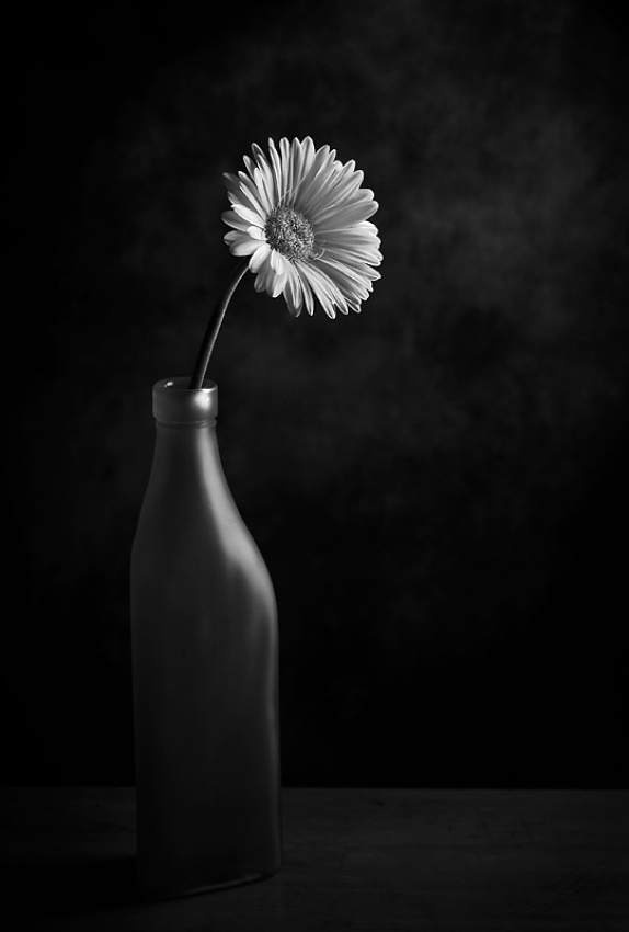 A piece of fine art art photography titled Solo by S A Bates
