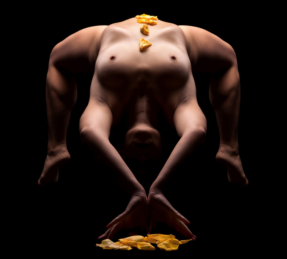A piece of fine art art photography titled Yellow Roses by Luis Louro