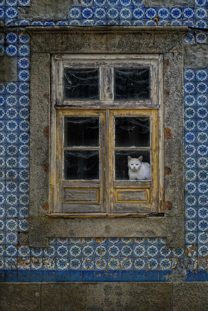 A piece of fine art art photography titled The Cat In the Window by Jose C. Lobato