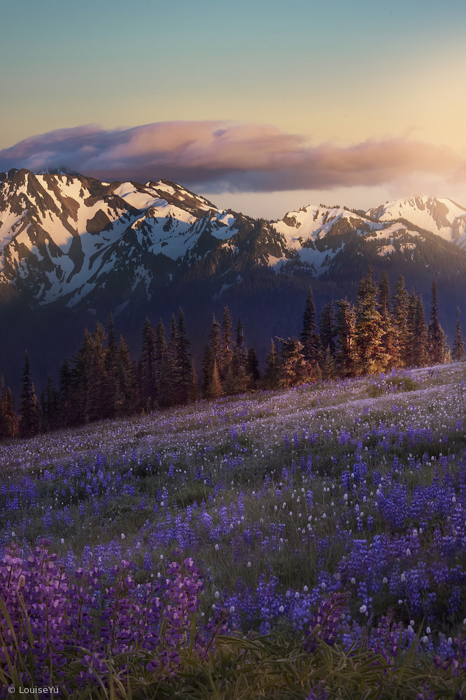 A piece of fine art art photography titled Hurricane Ridge by Louise Yu