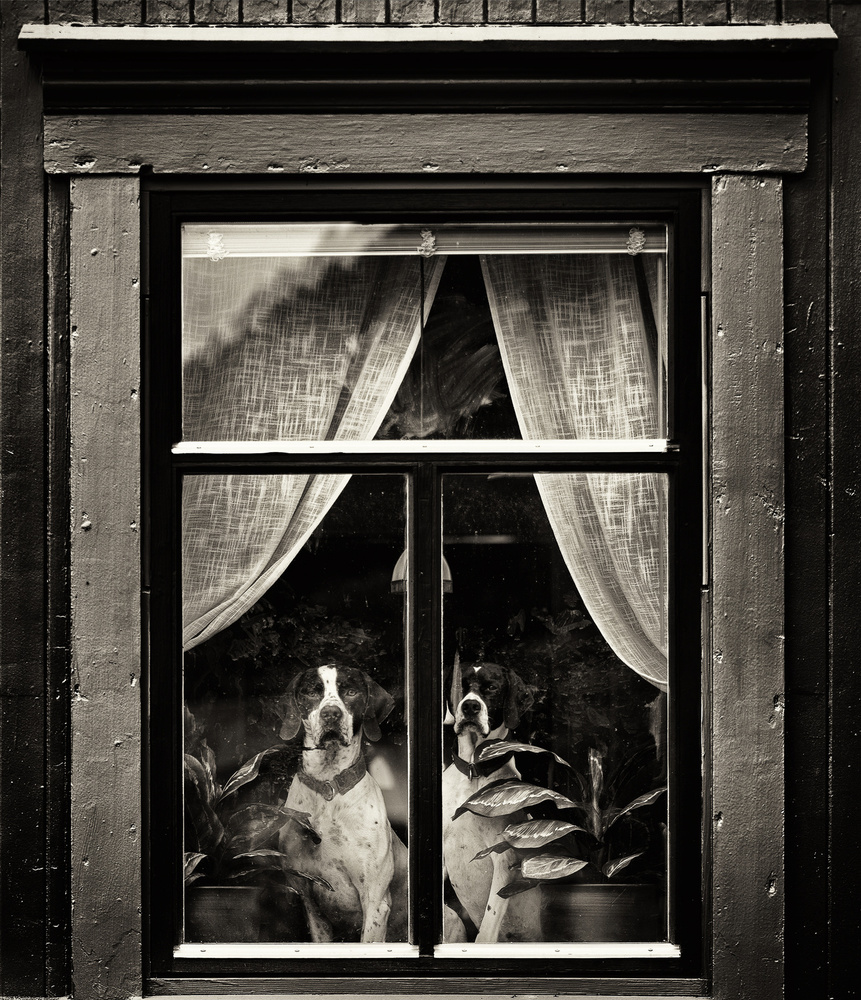 A piece of fine art art photography titled Dogs by Julien Oncete