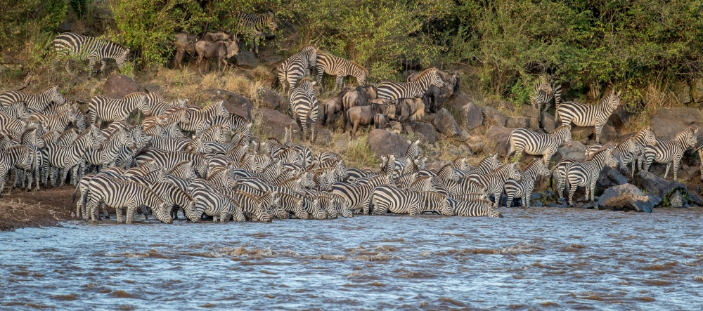 A piece of fine art art photography titled Zebra Conflageration by Jeffrey C. Sink