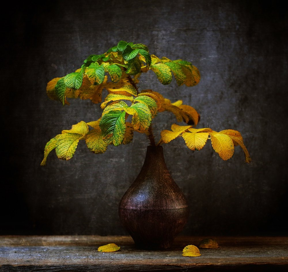 View this piece of fine art photography titled autumn by Mary Ann Andrews