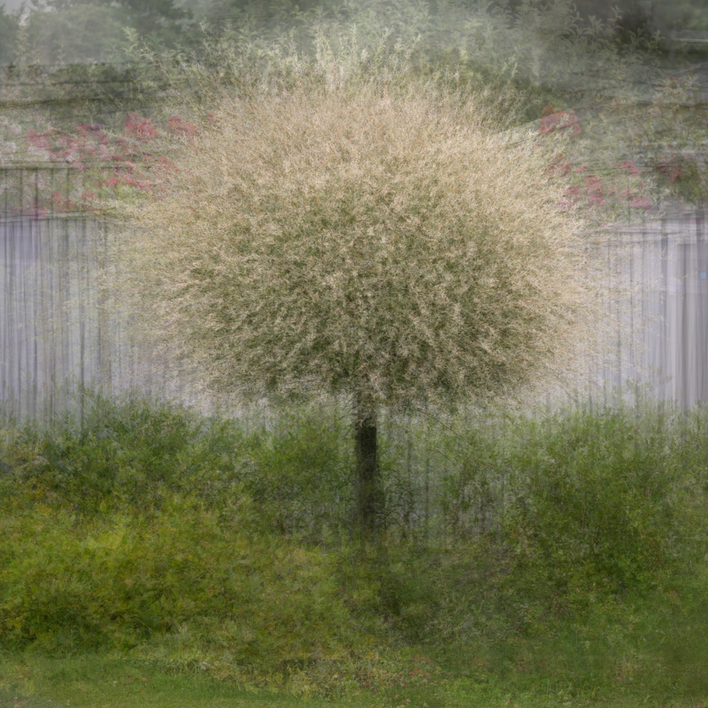 A piece of fine art art photography titled In Front of the Fence by Katarina Holmström