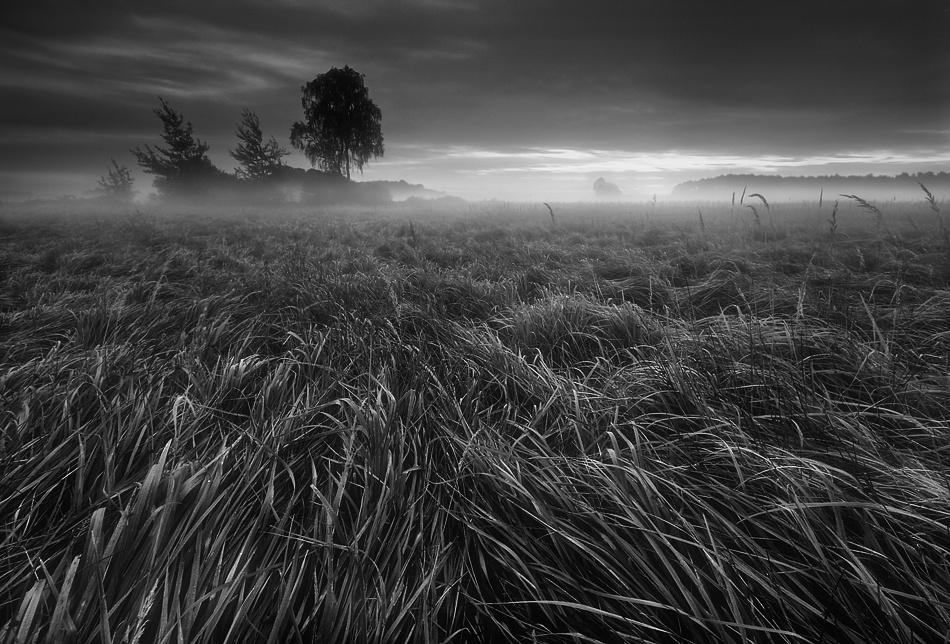 A piece of fine art art photography titled Grass by Krzysztof Browko