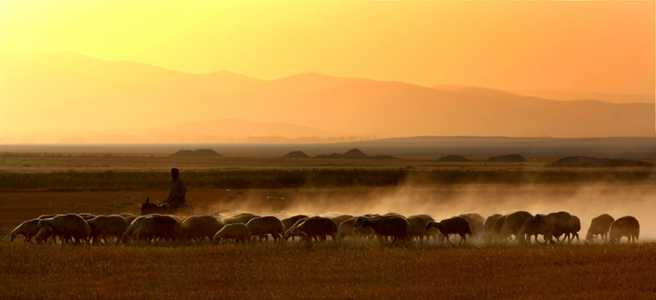 A piece of fine art art photography titled Shepherd by Cagatay UNLUSOY