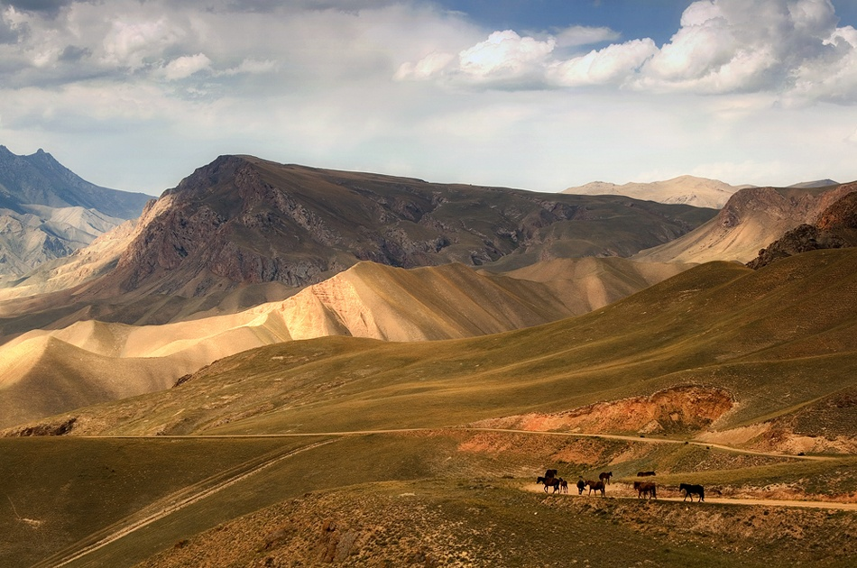 A piece of fine art art photography titled Horses In Kyrgyzstan by Reggy