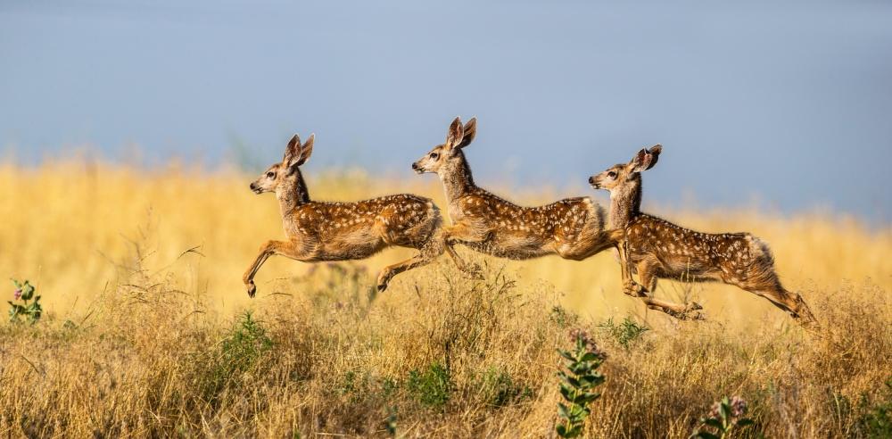 A piece of fine art art photography titled Tripple Jump by verdon