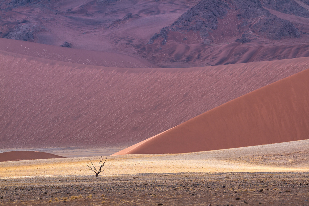 A piece of fine art art photography titled Namib's Palette by Marco Tagliarino