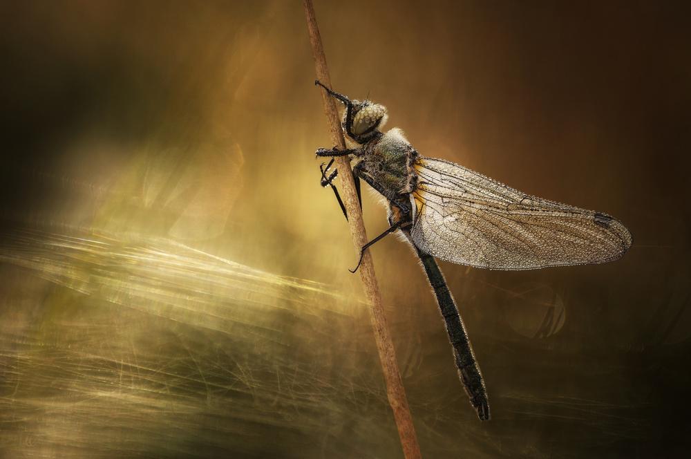 A piece of fine art art photography titled Natural Texture by Anton van Dongen