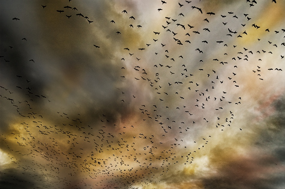 A piece of fine art art photography titled Birds by Ørjan Brenne