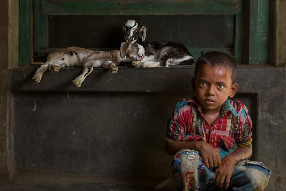A piece of fine art art photography titled Boy and Goats by Haitham AL Farsi