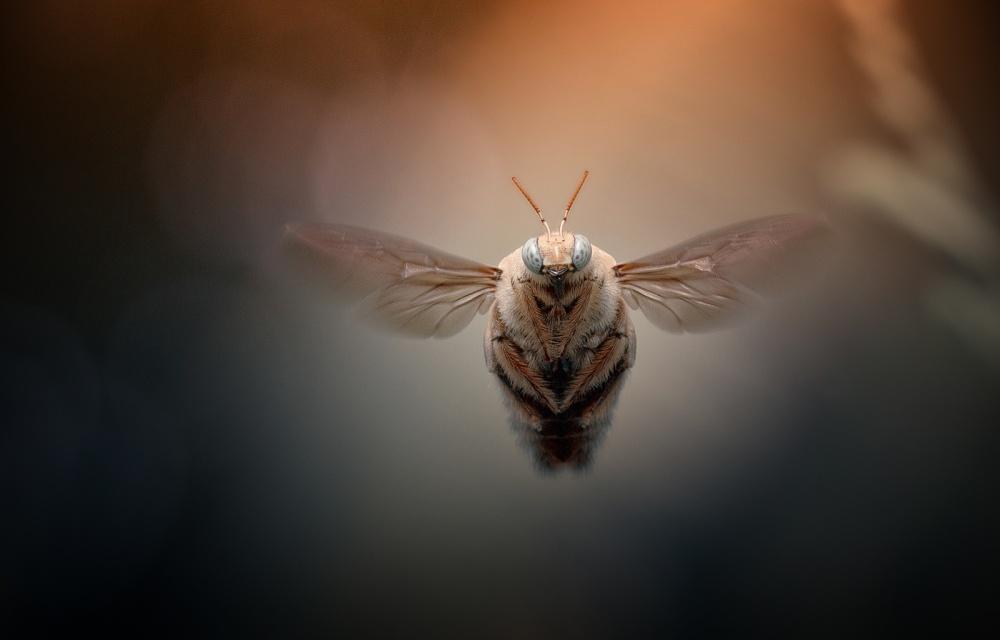 A piece of fine art art photography titled Cahaya Emas by Heri Wijaya