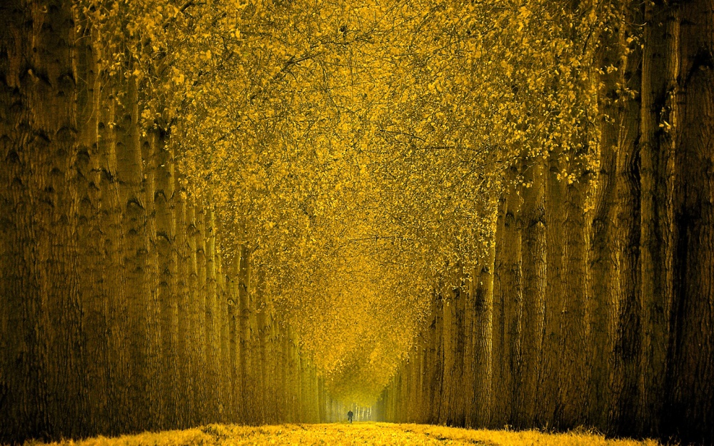 A piece of fine art art photography titled Cycle In Gold by Lars van de Goor