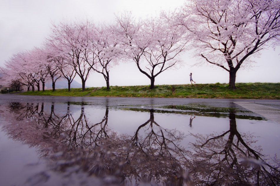 A piece of fine art art photography titled Rain of Spring by Kouji Tomihisa