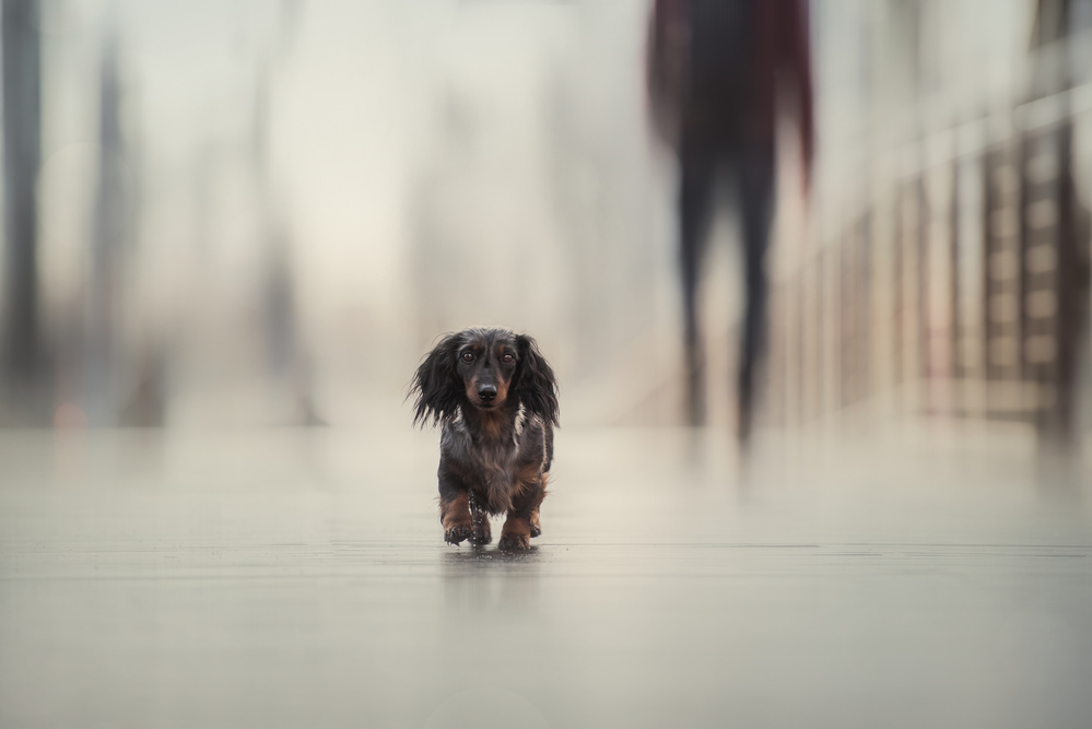 A piece of fine art art photography titled Going Home by Heike Willers