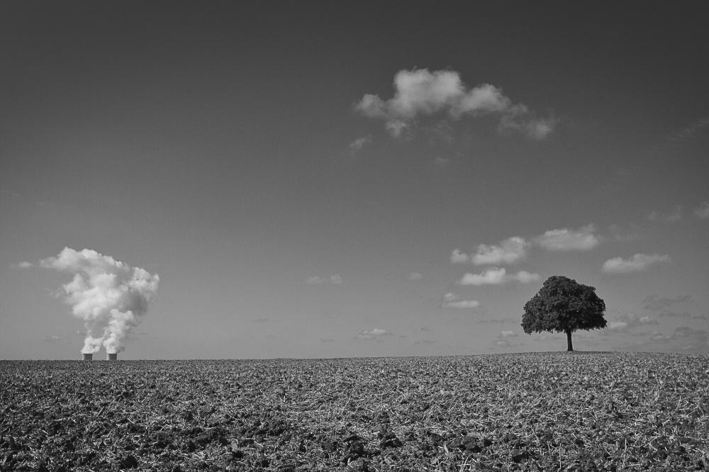 arbre nucléaire