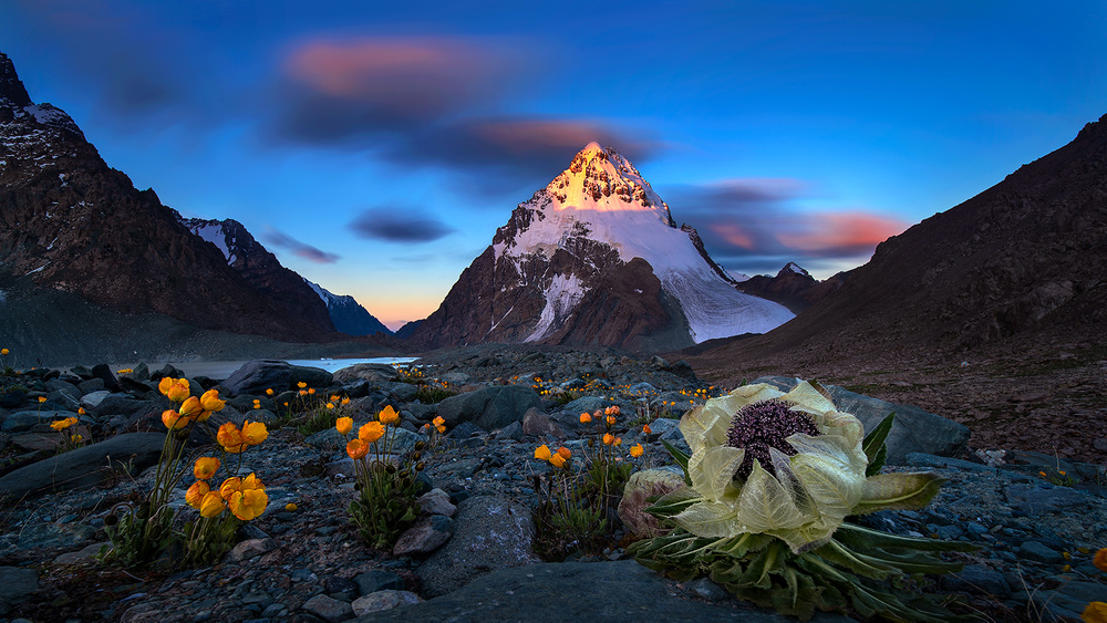 A piece of fine art art photography titled Bogda and Snow Lotus by Hua Zhu