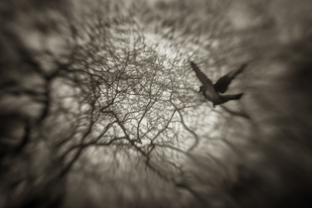 A piece of fine art art photography titled Lost In Flight by Gabriel Bistriceanu