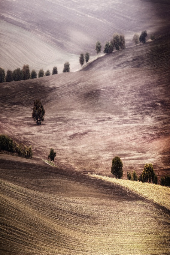 A piece of fine art art photography titled Autumn Fields by Szymon Olma