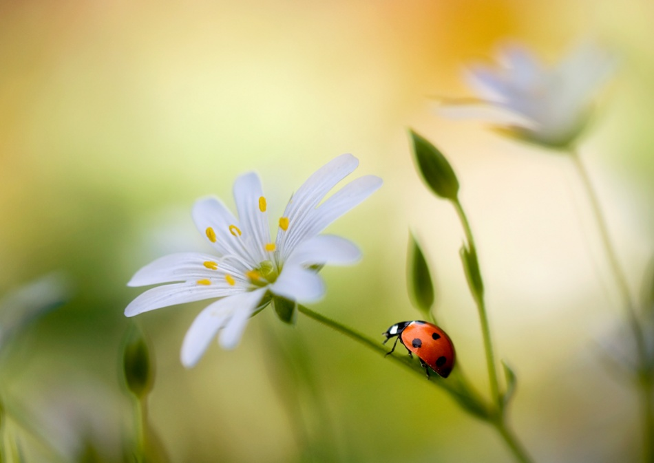 A piece of fine art art photography titled Summer Beauties by Mandy Disher