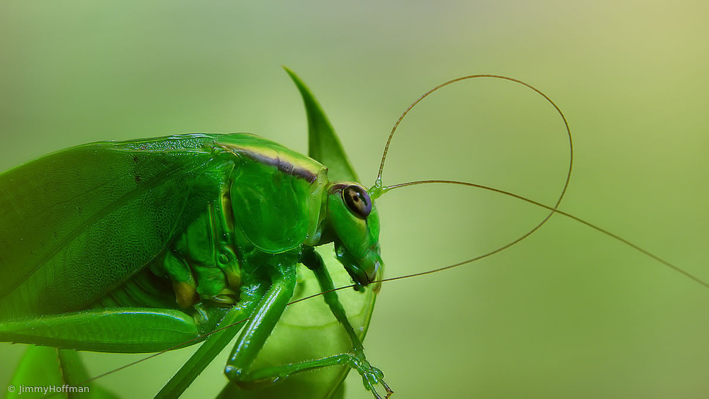 Antennal grooming