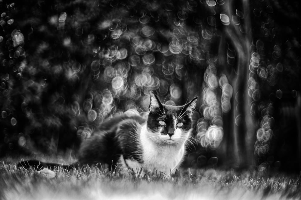 A piece of fine art art photography titled Cat!!! by Petr Šedý